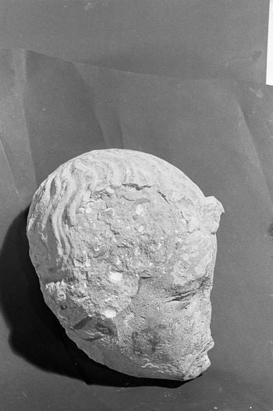 Statue en pierre de Romain, fragment : tête d'ange, profil droit