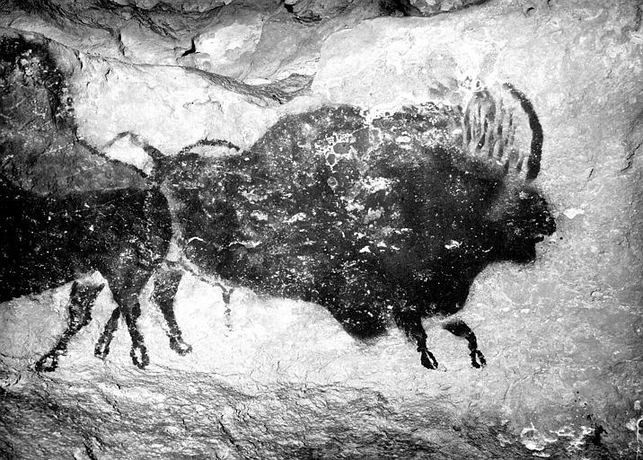 Nef côté gauche : deux bisons adossés, D