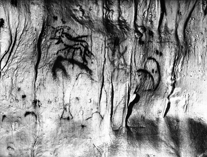 Peinture rupestre préhistorique : bélier (supposé)