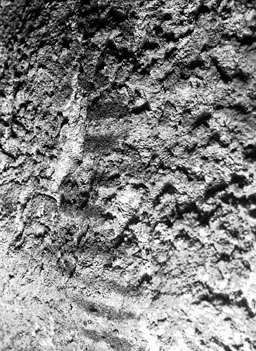 Puits de l'Homme : détails de moisissures