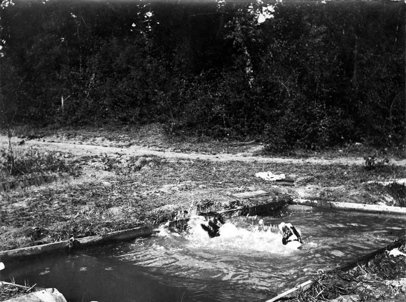 Curieuse photographie de bain de chevaux prise en arrière de notre front occidental. (Bassin piscine)