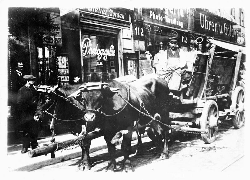 La guerre européenne. Par suite du manque de chevaux, on voit véhiculer, dans les rues de la capitale germanique, des attelages de boeufs