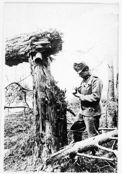 Grenade ayant détruit un arbre