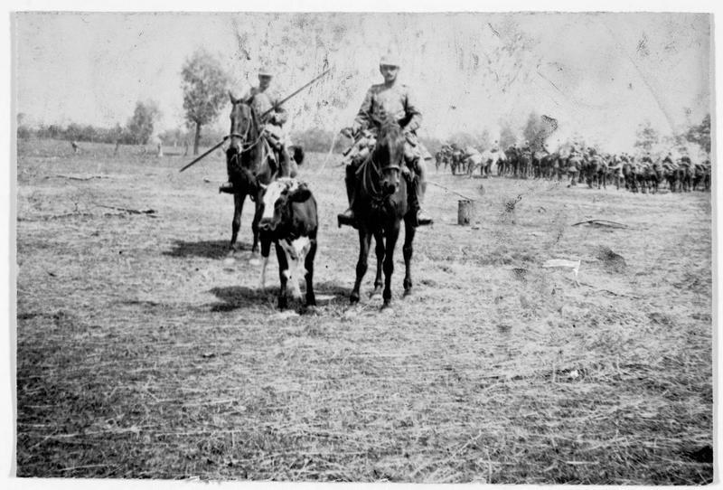 Un veau amené par des cavaliers allemands