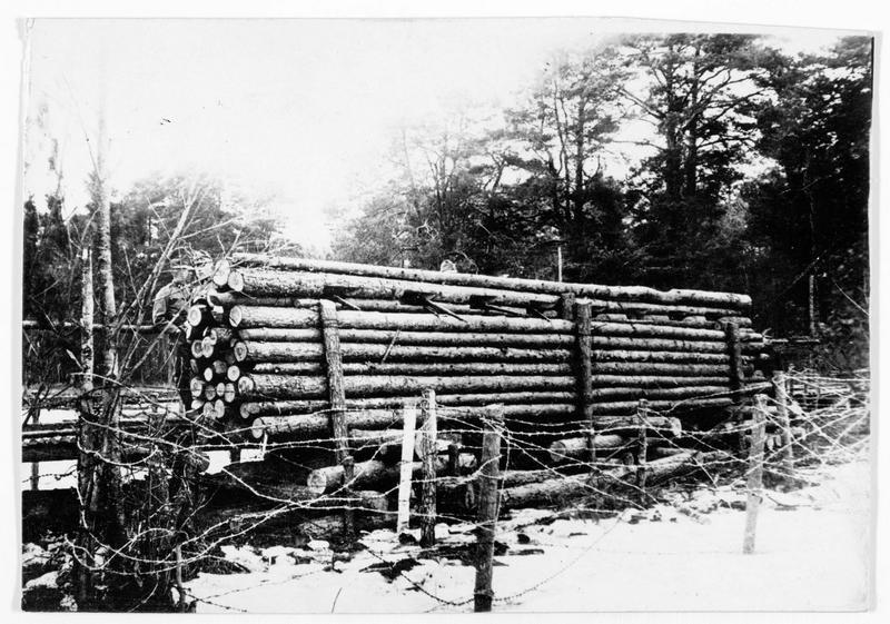 Front de Volhynie. Troncs d'arbres pour construire des abris pour les troupes autrichiennes