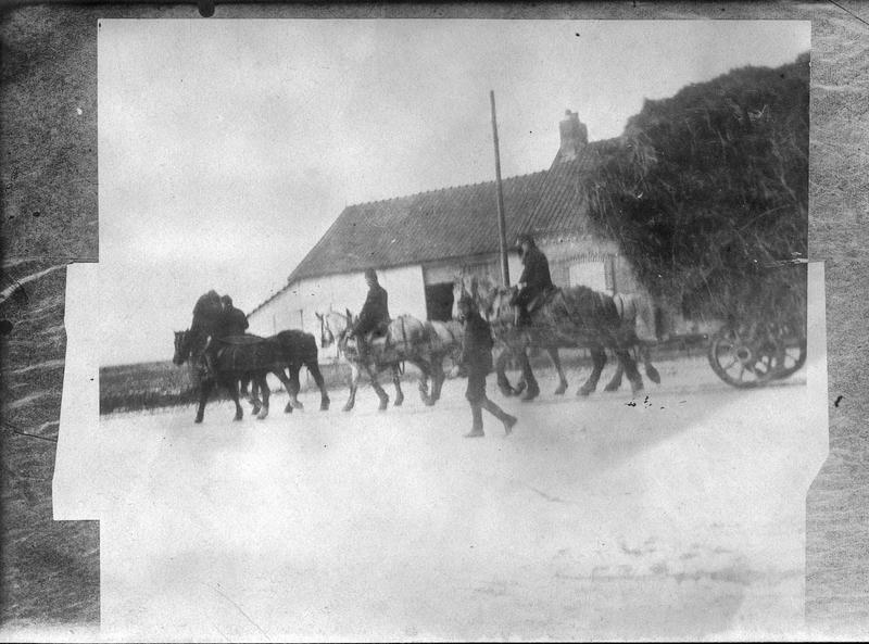 Convoi de paille pour la cavalerie du front
