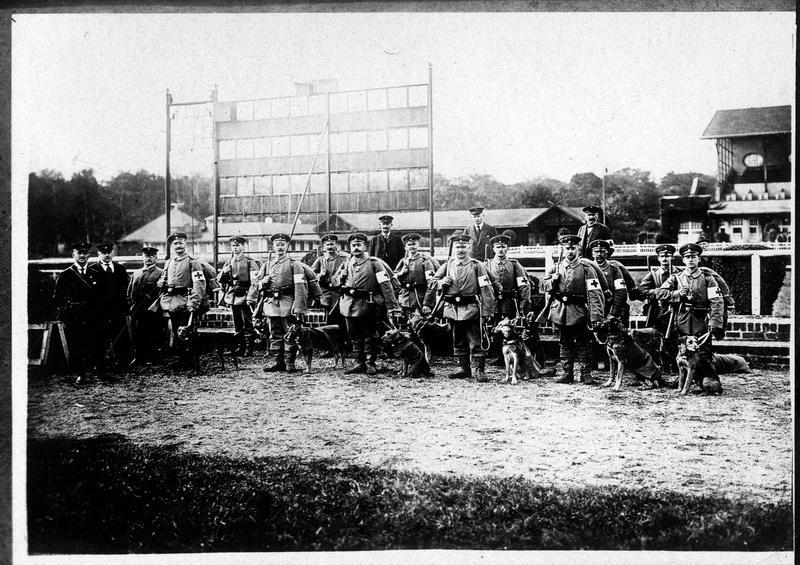 Chiens sanitaires. Transmis 23 octobre 1914