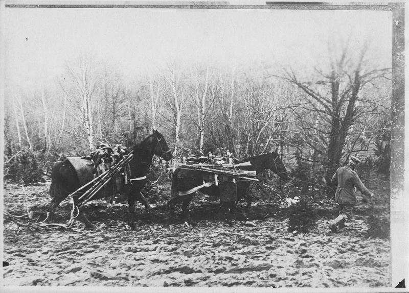 Chevaux transportant des fusils aux tranchées