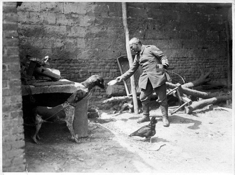 [Soldat allemand nourrissant ses chiens]