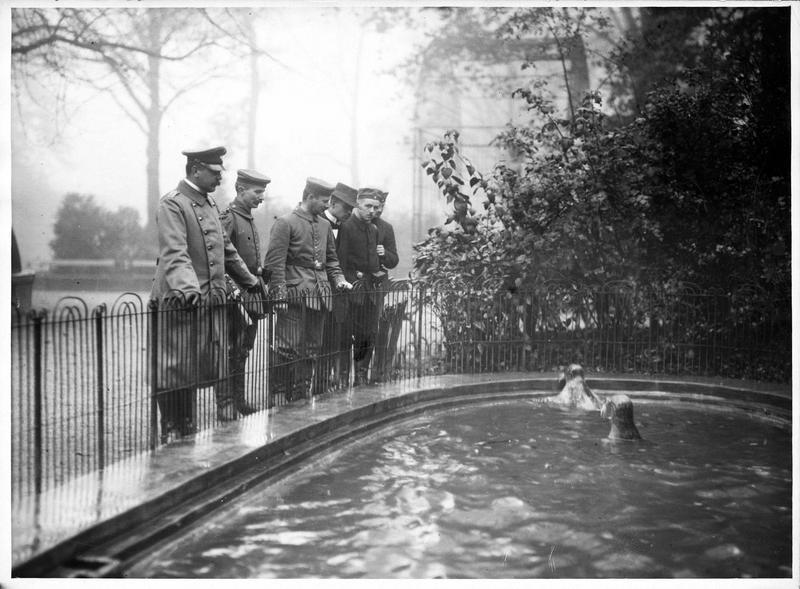 Les Allemands dans le jardin zoologique d'Anvers. [Phoques]