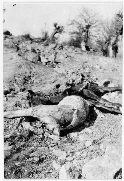 Cadavres de chevaux de patrouille de la cavalerie russe près de Narocz (Lac Narotch)