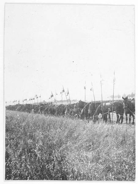 Front occidental. Chevaux d'une patrouille de cavalerie