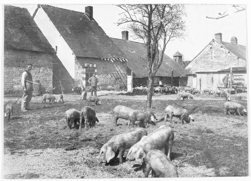 Soldats allemands dans une ferme en France, cochons dans la cour