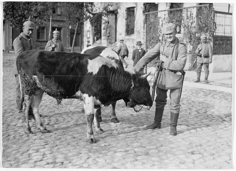 Réquisition du bétail sur le front oriental