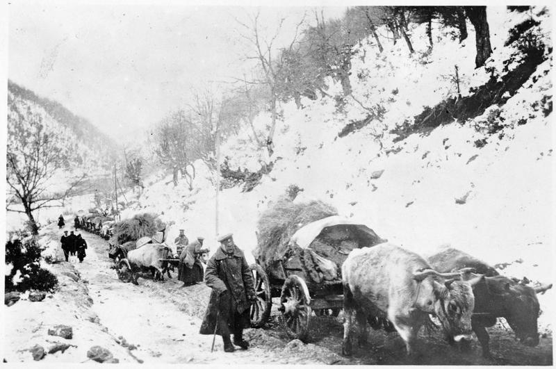 Convoi bulgare d'attelages de boeufs, dans les montagnes de Serbie