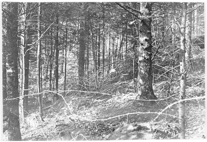 Coin de forêt occupé par les Allemands et protégé par du fil de fer barbelé