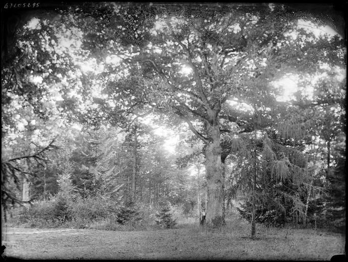 Sous-bois, une femme sous un arbre