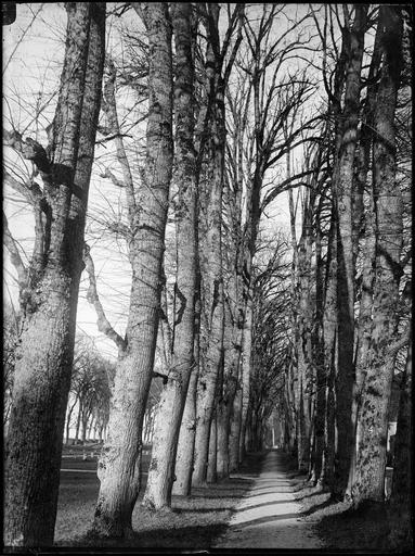 Parc : allée forestière