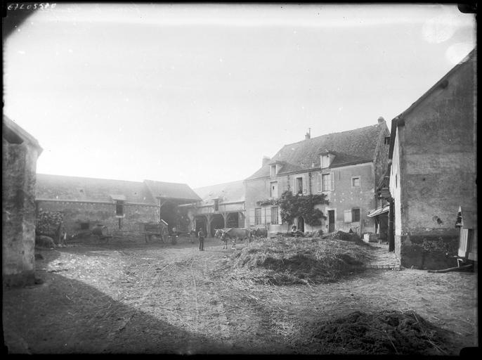 Cour de la ferme : bâtiments et attelage de boeufs