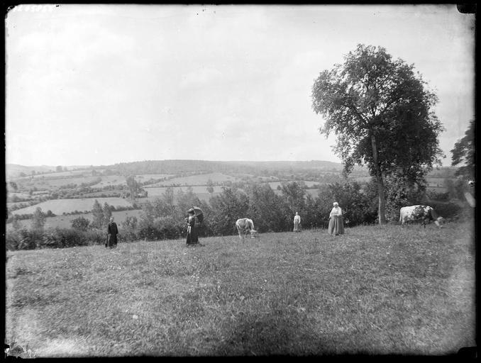 Groupe de personnes et vaches dans une prairie