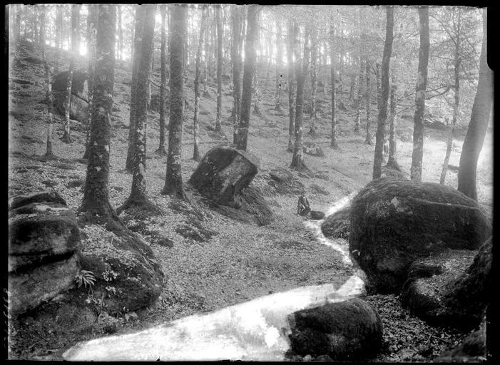 Rochers dans une forêt