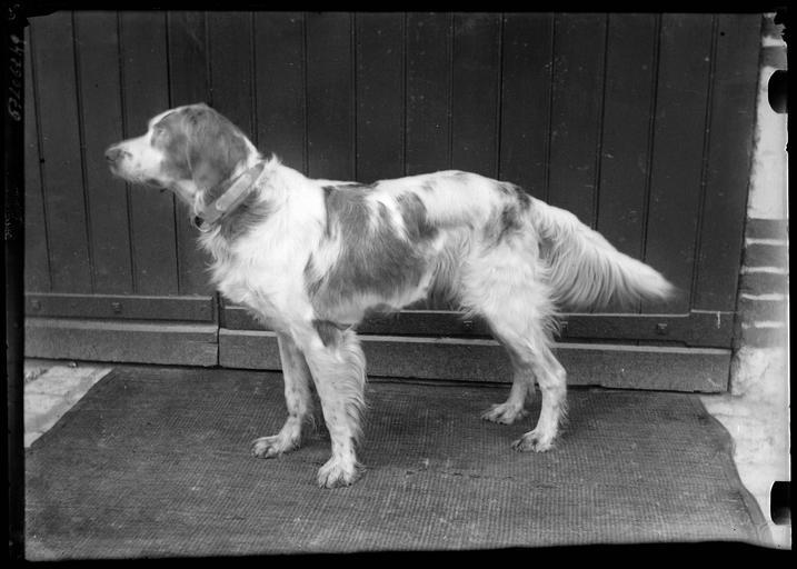 Portrait d'un chien
