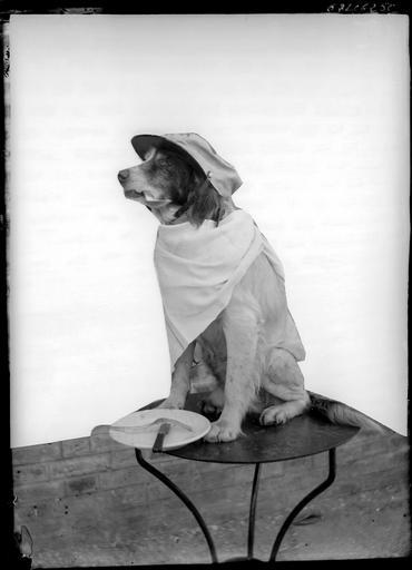 Portrait d'un chien déguisé assis sur une table