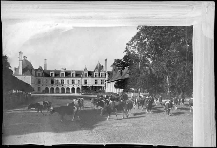 Ensemble nord sur cour d'honneur, troupeau de vaches au premier plan