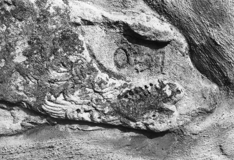 Sculpture : pierre de parement du mur de l'église, détail de la tête du lion, relief écrasé