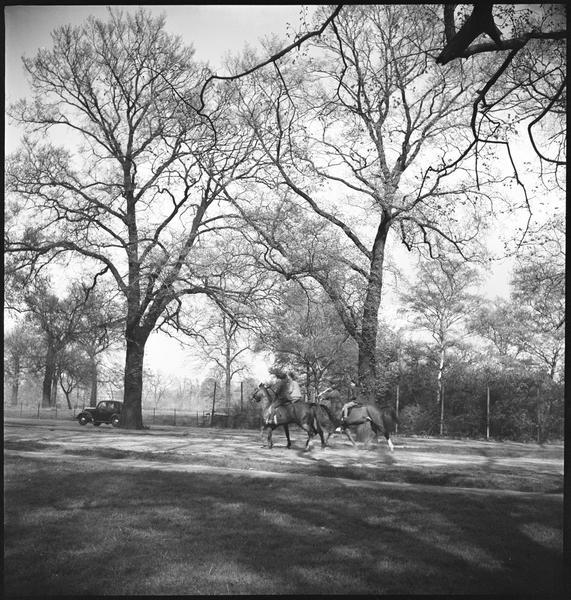 Vue sur le parc : cavaliers et automobile