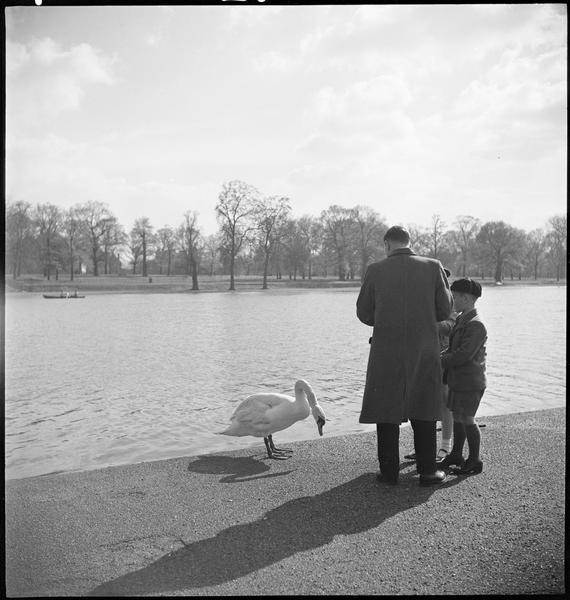 Au bord d'un bassin, un homme et deux enfants côtoient un cygne