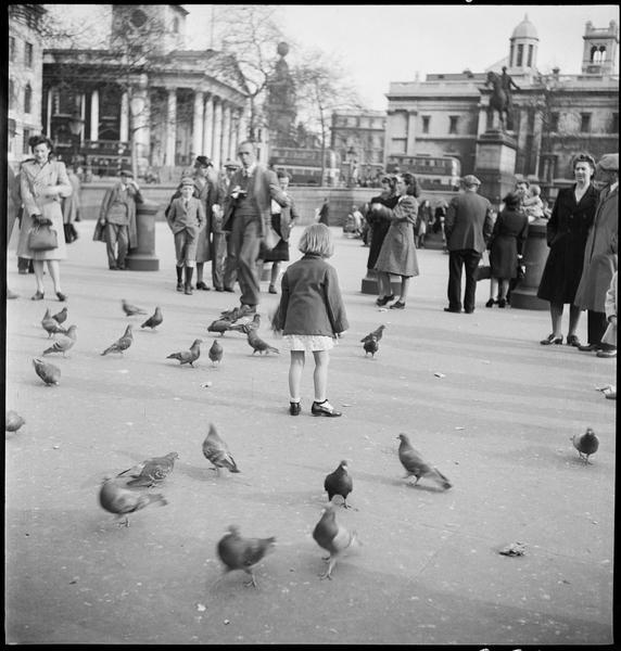 Une petite fille au milieu des pigeons, des passants et un homme équipé d'un appareil photographique