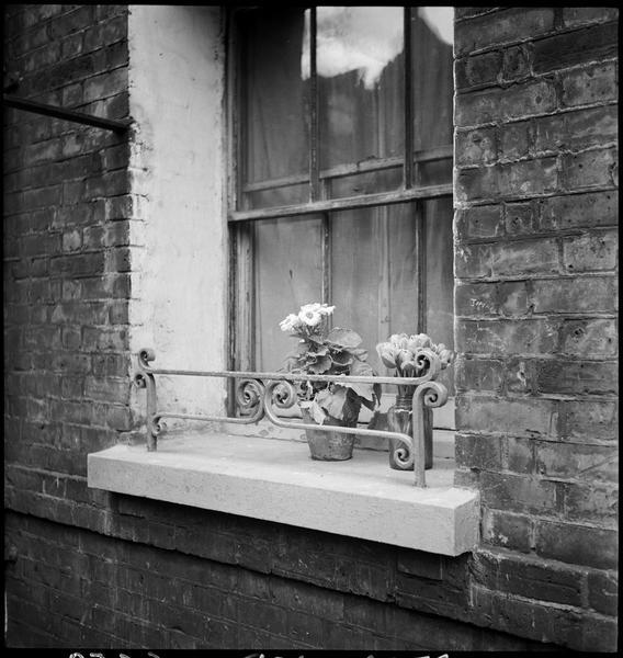 Fleurs en pots sur le rebord d'une fenêtre
