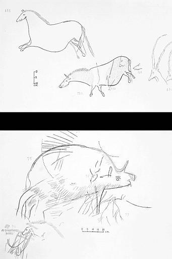 Deux relevés : Un rhinocéros n° 73 à 77 et chevaux n° 188 à 192