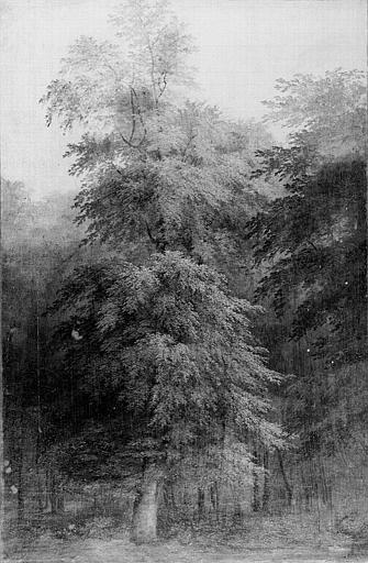 Peinture sur toile : Etude d'arbre en forêt de Compiègne
