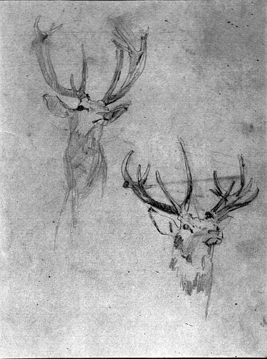 Dessin au crayon noir : Deux têtes de cerf (étude pour Saint-Hubert à Chantilly)