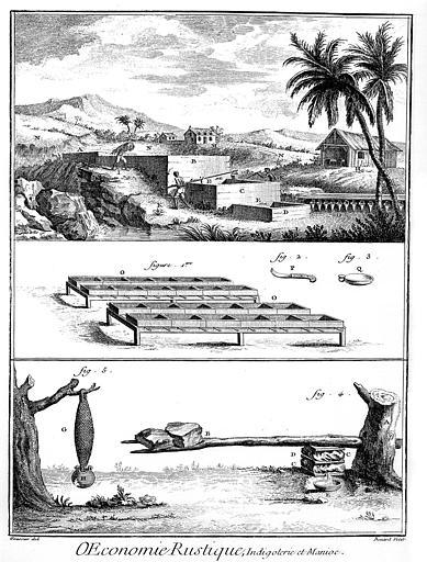 Gravure : Economie rustique, indigoterie et manioc