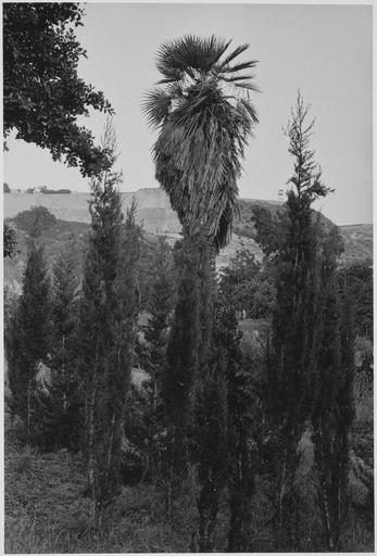 Palmier, cyprès et paysage