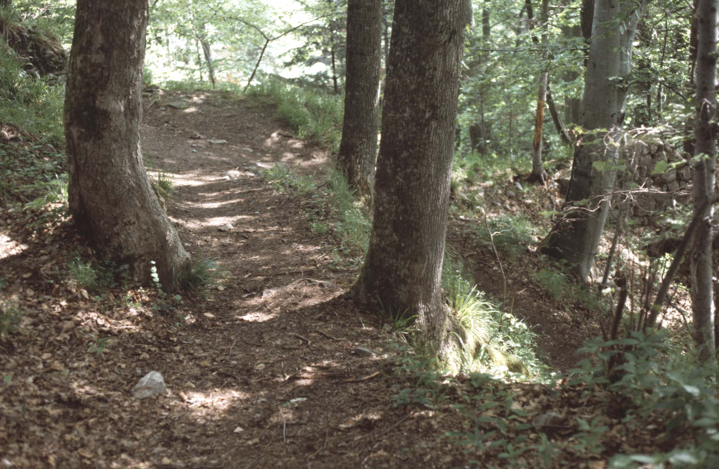 Accès au site dans les sous-bois : chemin