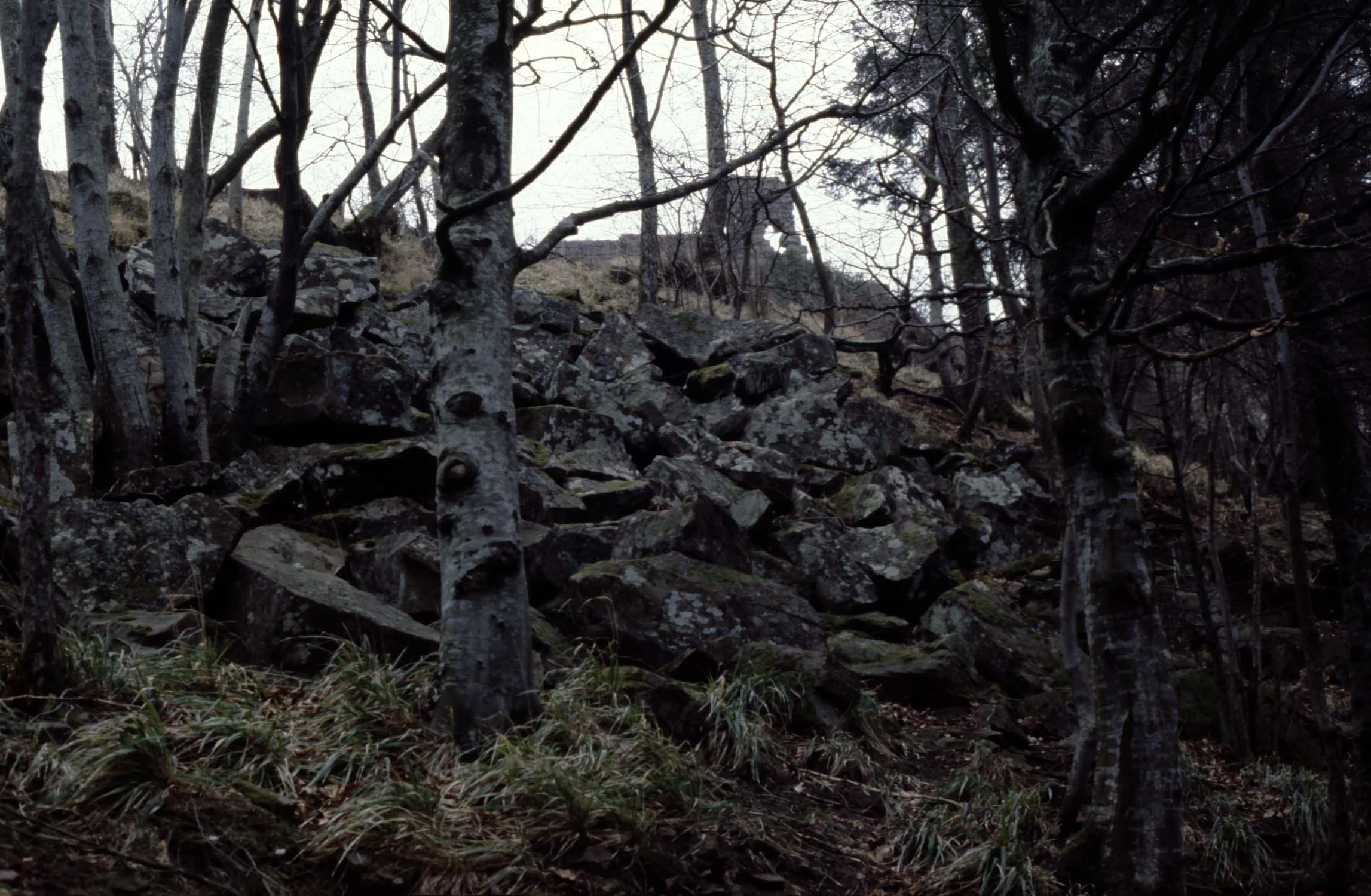 Vestiges d'un mur néolithique entre les arbres