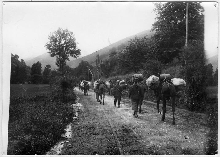 Mulets chargés partant pour le camp de Hartmannswillerkopf