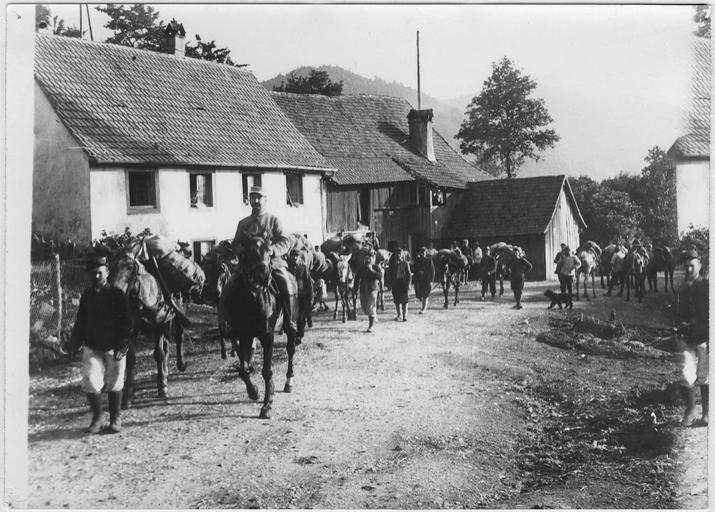 Convois de mulets partant pour le camp de Hartmannswillerkopf