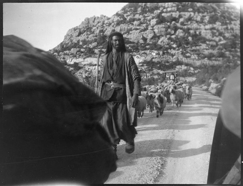 Berger devant son troupeau, sur la route de Beyrouth à Tripoli