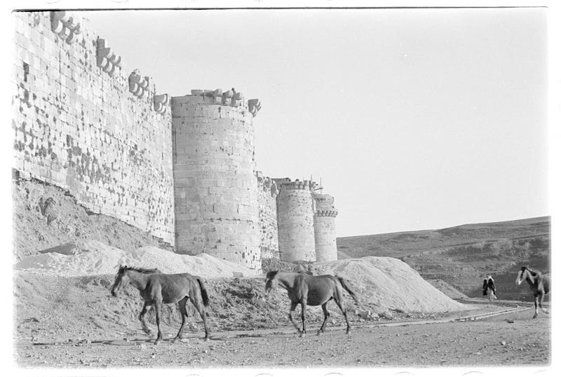 Chevaux devant le front ouest