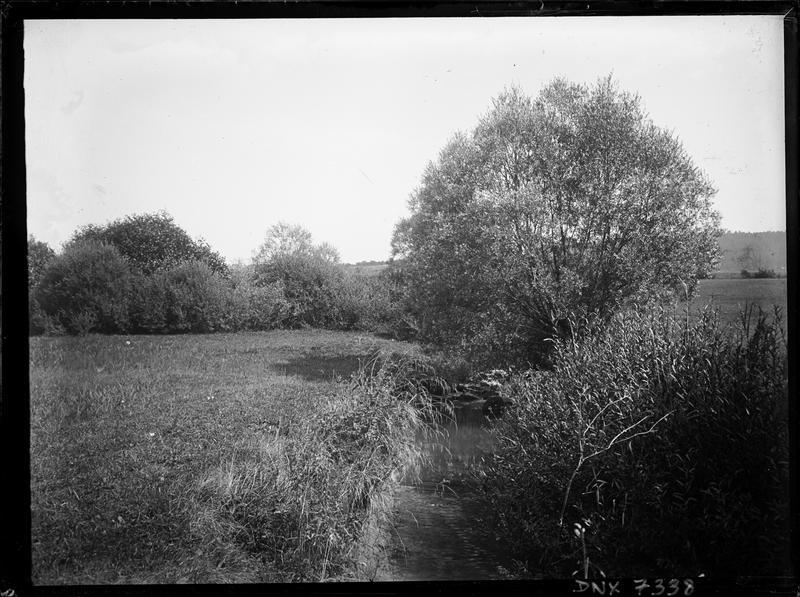 Rivière bordée de prés et d'arbres