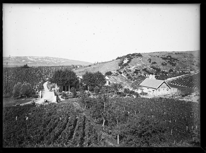 Vignobles et collines en arrière-plan