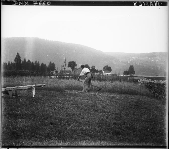 Paysage rural : fauchaison