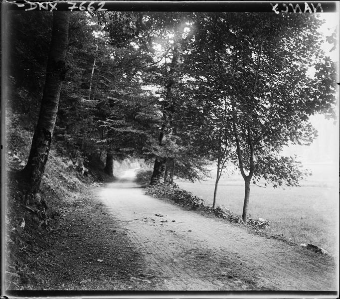 Paysage rural : chemin en lisière de forêt