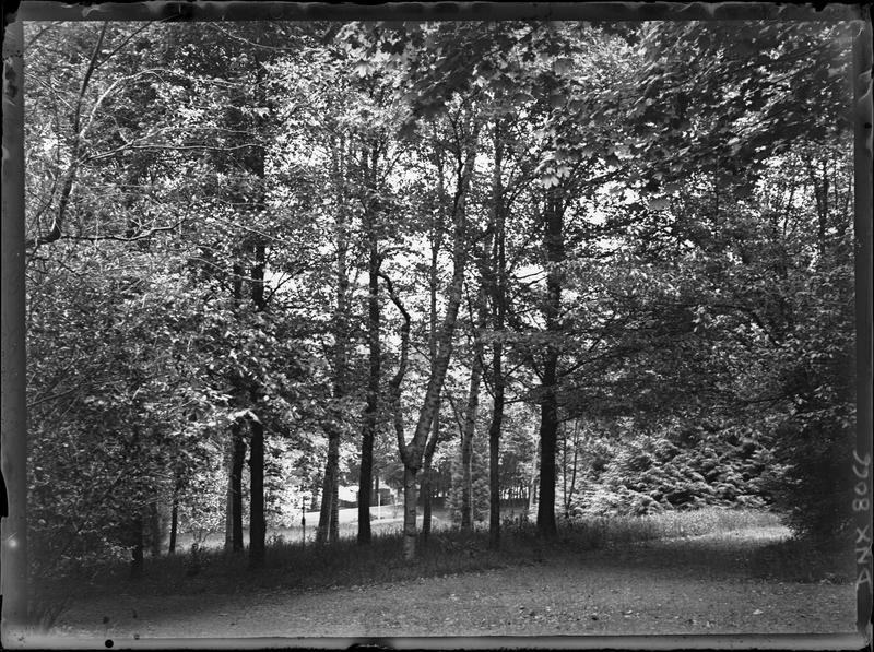 Paysage rural : forêt de feuillus
