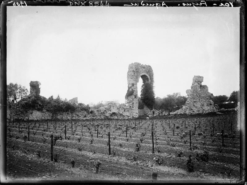 Vestiges d'une arche, vignes au premier plan
